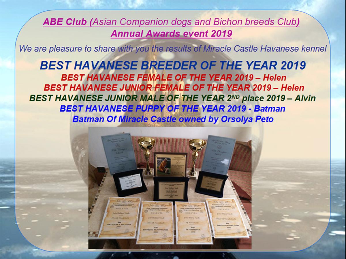 Havanese Bests of year 2019