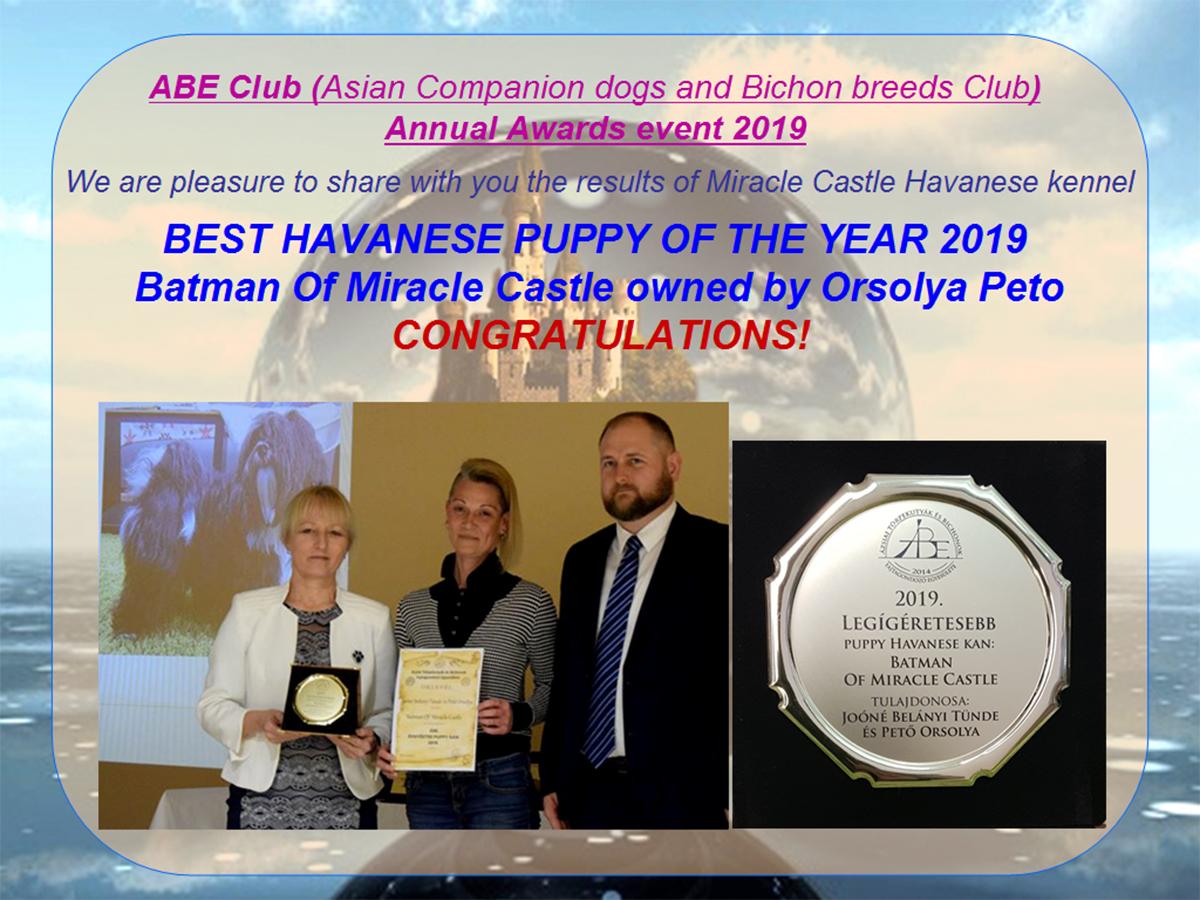 Havanese Best puppy of year 2019