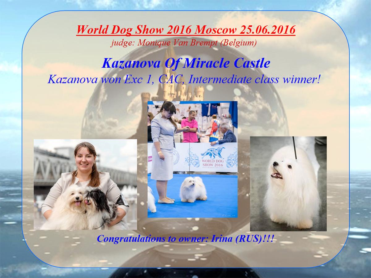 WDS 2016 Moscow  class winner Havanese