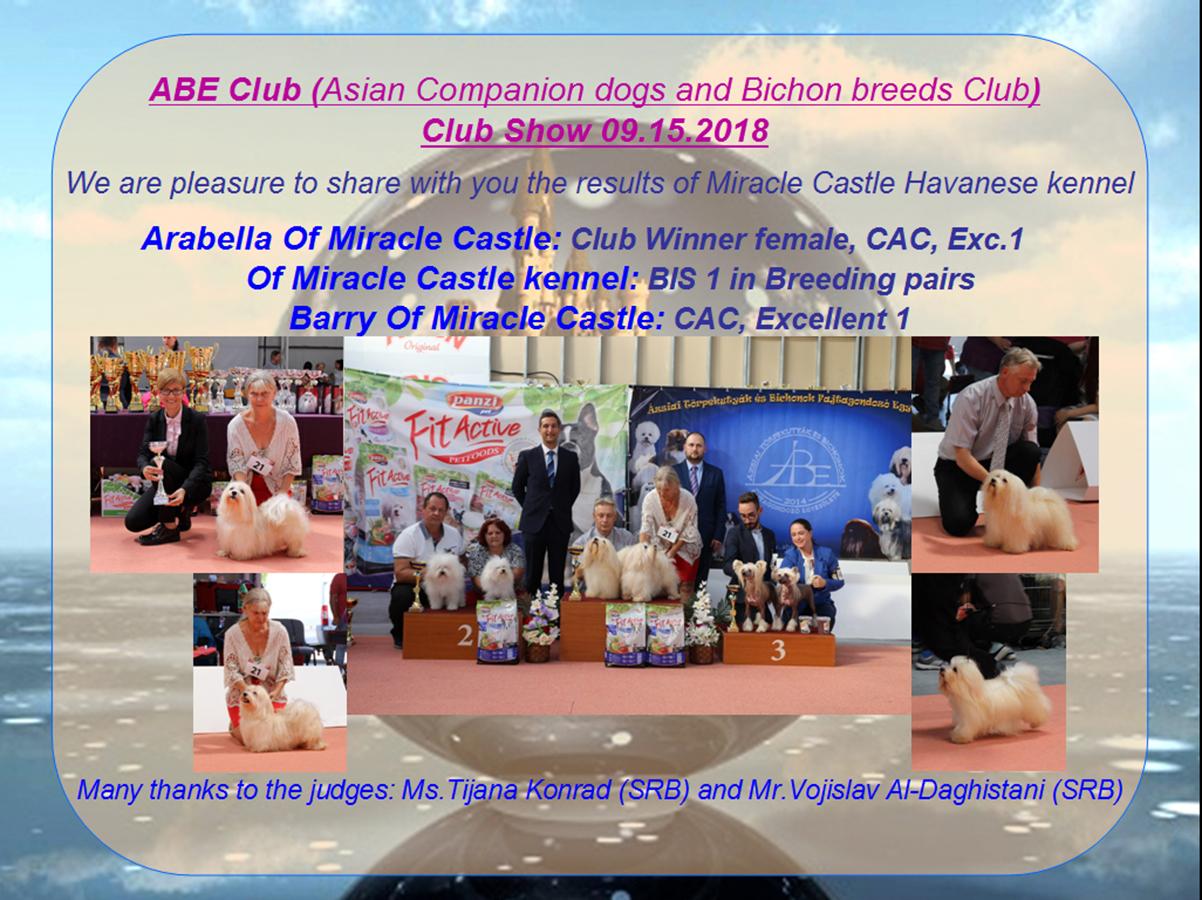 Havanese Club Winner female 2018- BIS 1 Breeding pair